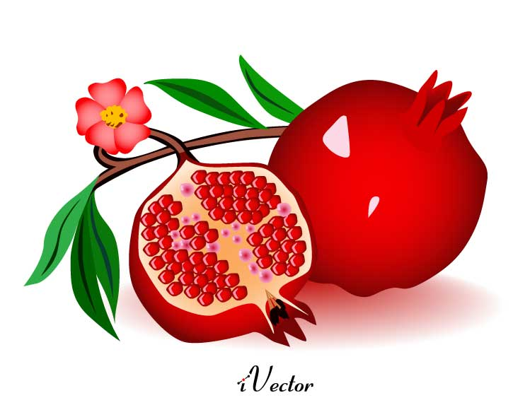دانلود طرح وکتور انار کارتونی Pomegranate vector download