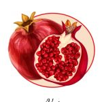 تصاویر وکتور انار Pomegranate Vector Art