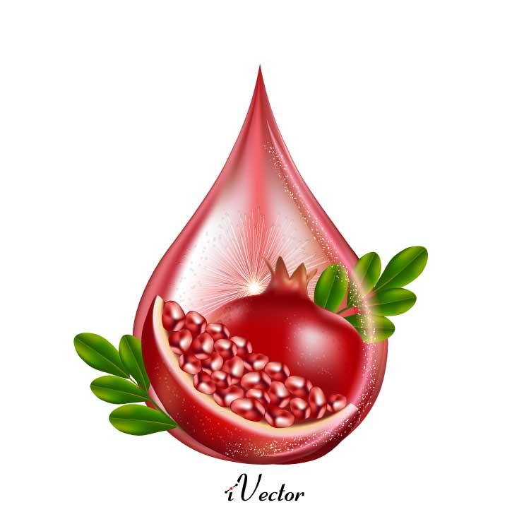 دانلود فایل وکتور لایه باز انار Pomegranate Drawing Vector Art