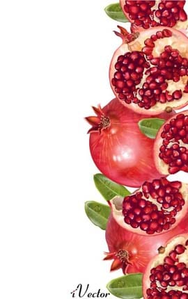 دانلود وکتور طرح انار Pomegranate Vector Image