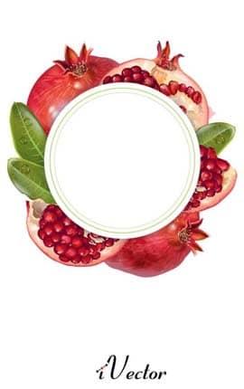 دانلود کادر دایره وکتور طرح انار Pomegranate Border Vector Image