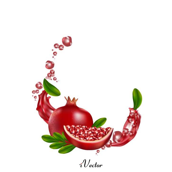 وکتور طرح واقعی انار pomegranate illustration vector