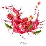 فایل وکتور لایه باز انار Pomegranate Drawing Vector Art