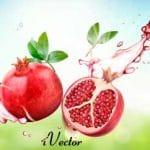 دانلود رایگان وکتور طرح انار, Pomegranate Drawing Vector Art