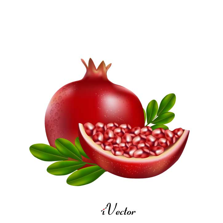 دانلود رایگان وکتور طرح انار Download Yalda Night Decoration Pomegranate Melon Drawing vector