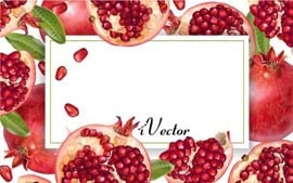 دانلود کادر وکتور طرح انار Pomegranate Royalty Vector Image