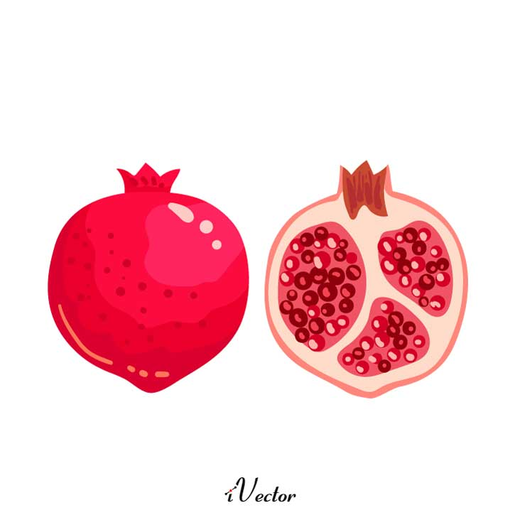 وکتور انار نقاشی pomegranate illustration vector