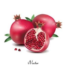 وکتور تصویر انار pomegranate vector art