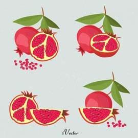 وکتور انار لایه باز در طرح های متفاوت Pomegranate vector free download