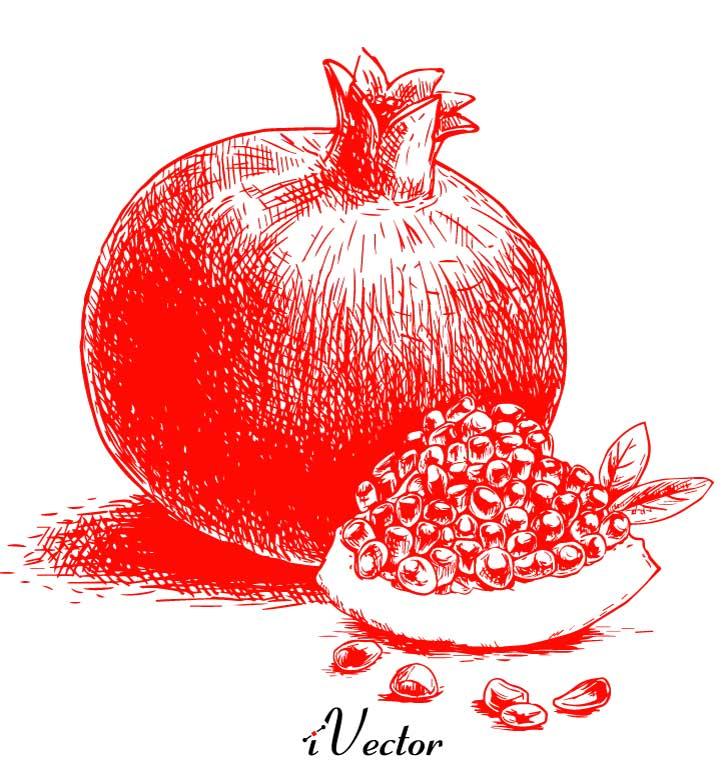 دانلود وکتور انار شب چله pomegranate yalda night vector