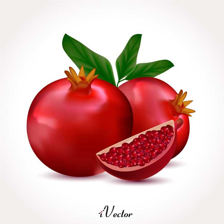 وکتور طرح های واقعی انار pomegranate illustration vector
