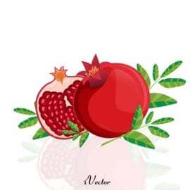 تصاویر وکتور انار شب یلدا Pomegranate Free Vector Art