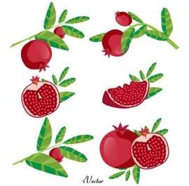وکتور انار لایه باز Pomegranate Fruit Vector
