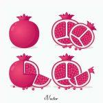 دانلود وکتور انار با کیفیت بالا Pomegranate Vectors