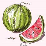 دانلود رایگان وکتور طرح هندوانه Download Yalda Night Decoration Pomegranate Melon Drawing vector